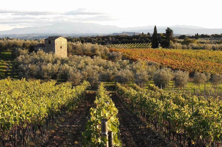 Excursii cu bicicleta in San Gimignano si Chianti