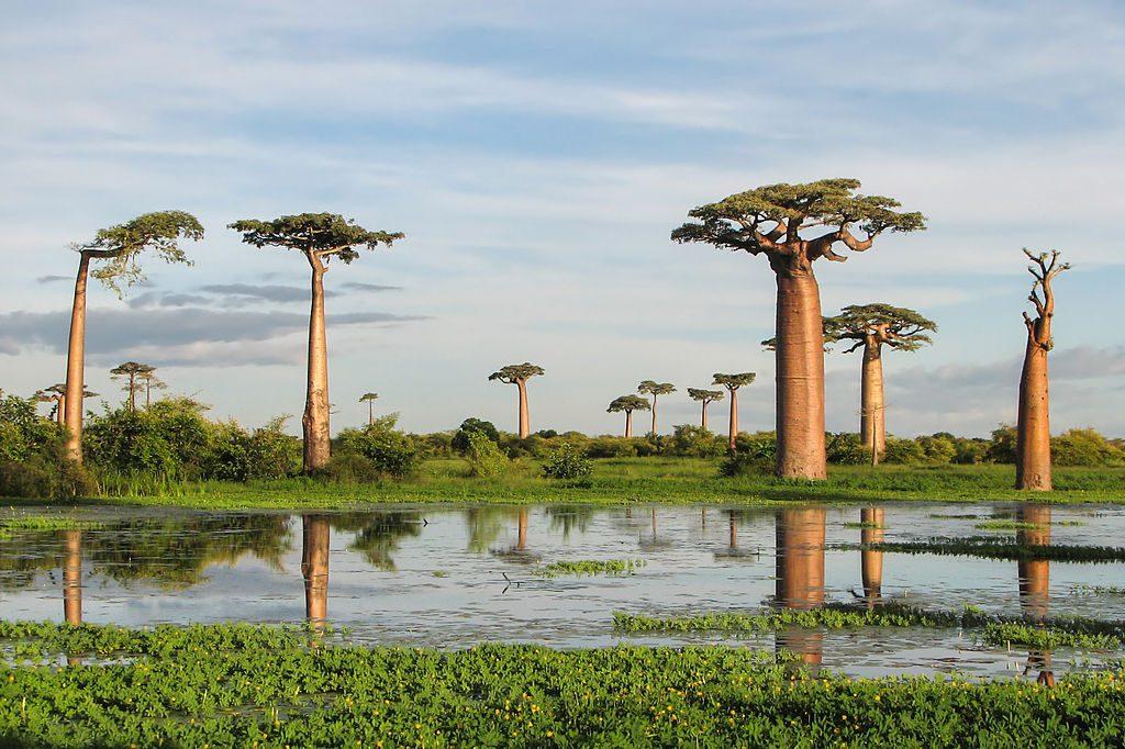 Padurea tropicala Andasibe si rezervatia Kirindy (Madagascar)
