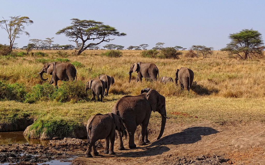 Safari in Zanzibar 10 zile/9 nopti