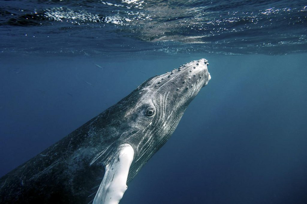Republica Dominicana: Observarea balenelor si a pasarilor