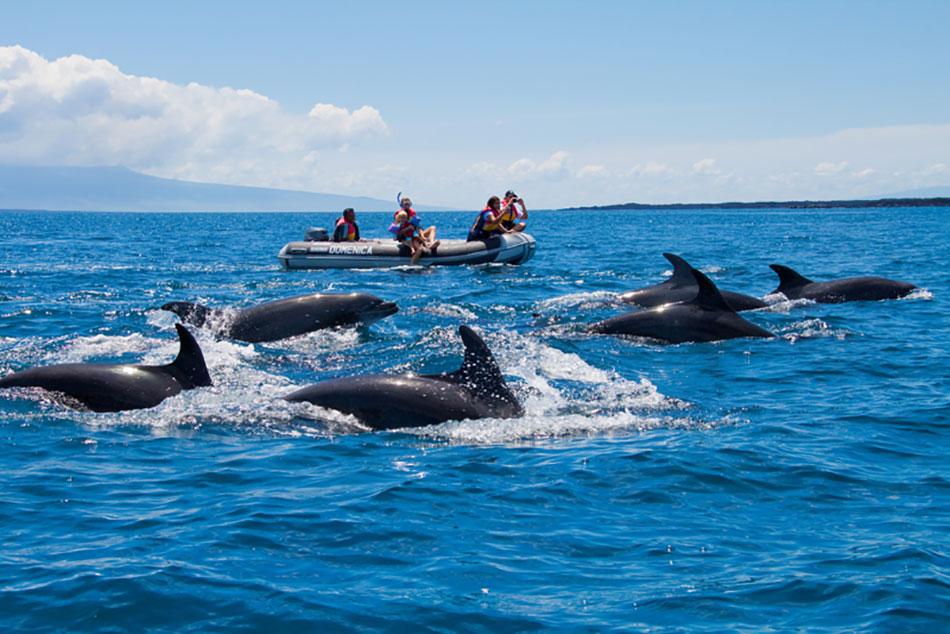 Sea Star Journey : Insulele Galapagos