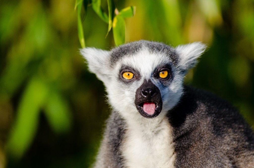 Descopera partea de est a Madagascarului si sejur pe Insula Sainte Marie