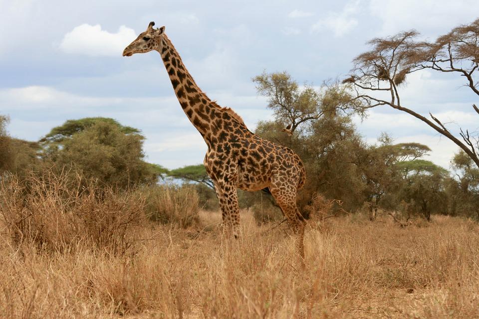 AFRICA -Safari Kenia & Tanzania 2019