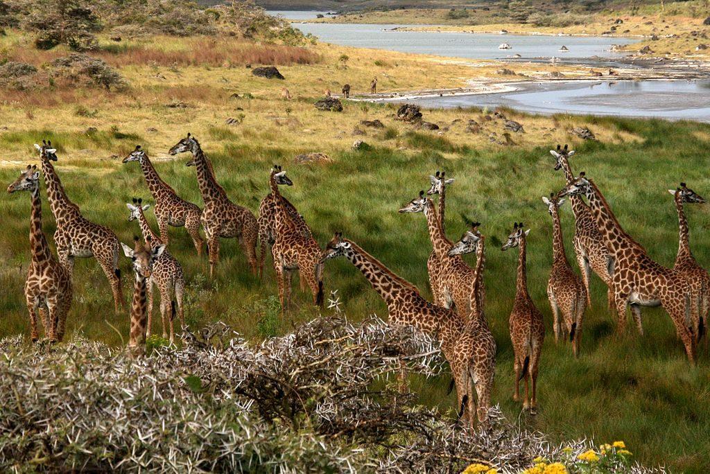 Safari in Kenya si Tanzania 10 zile/11 nopti