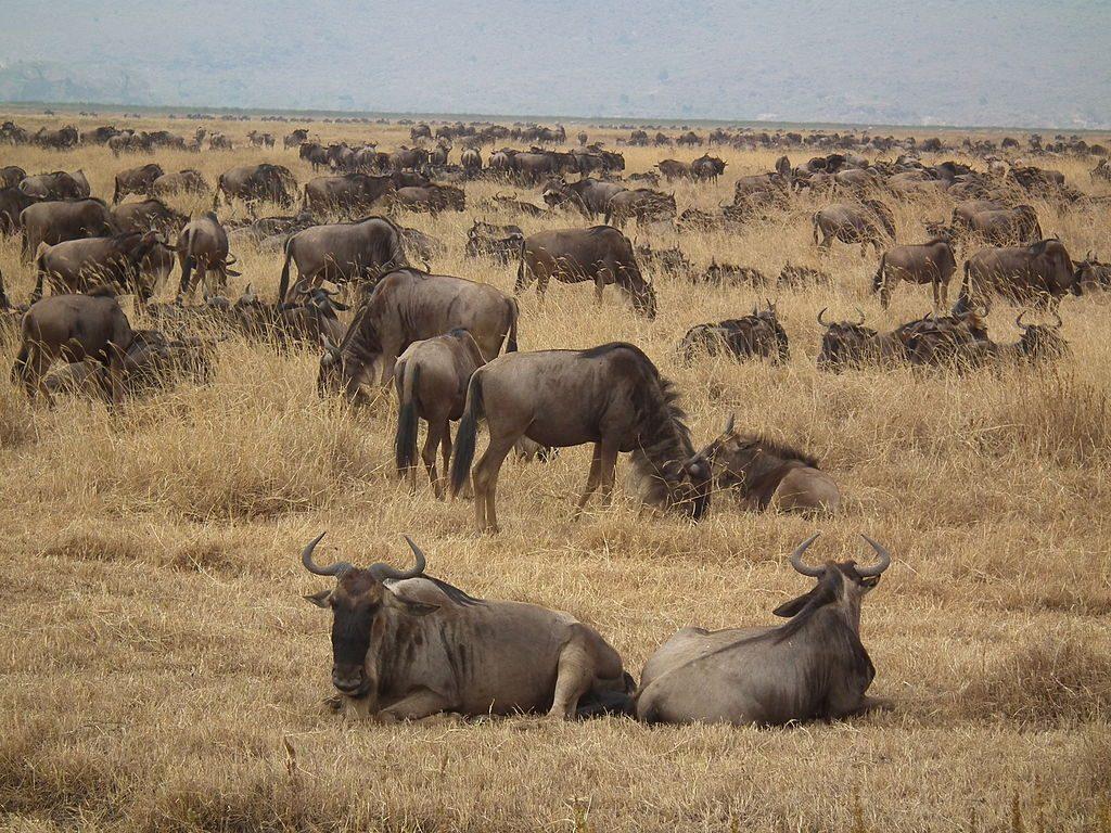 Safari in tabara Ang'ata Zanzibar – 6 zile