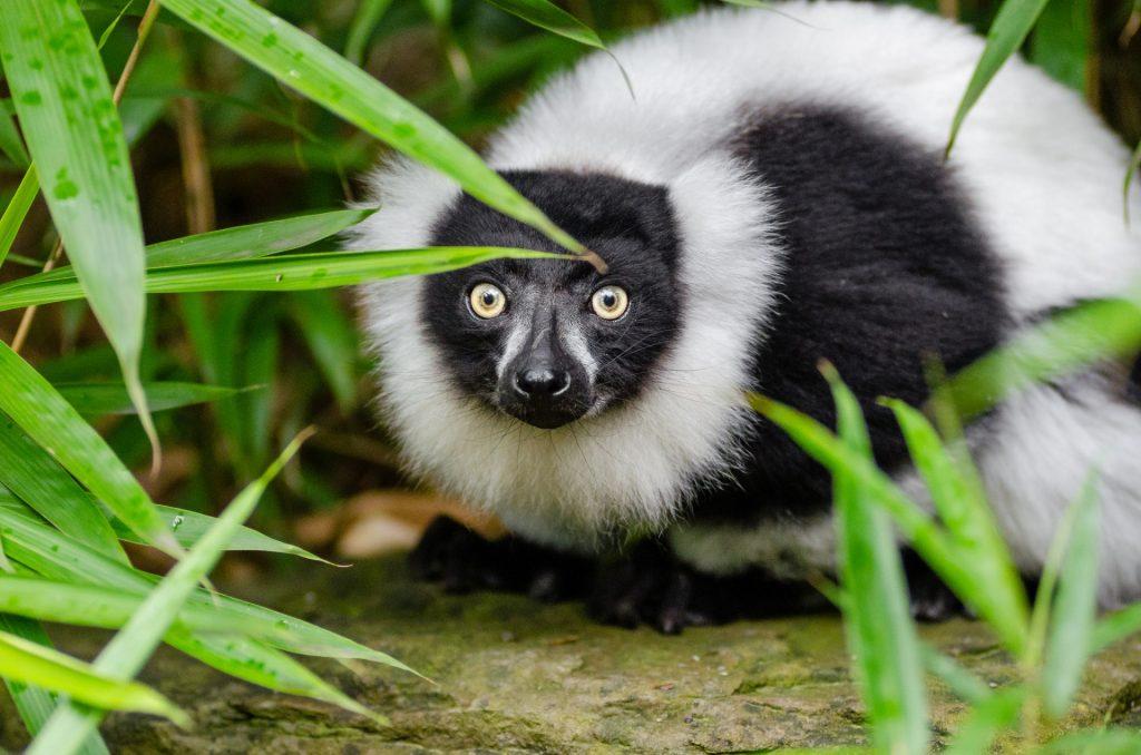 Fata in fata cu populatia din Madagascar si lemurii