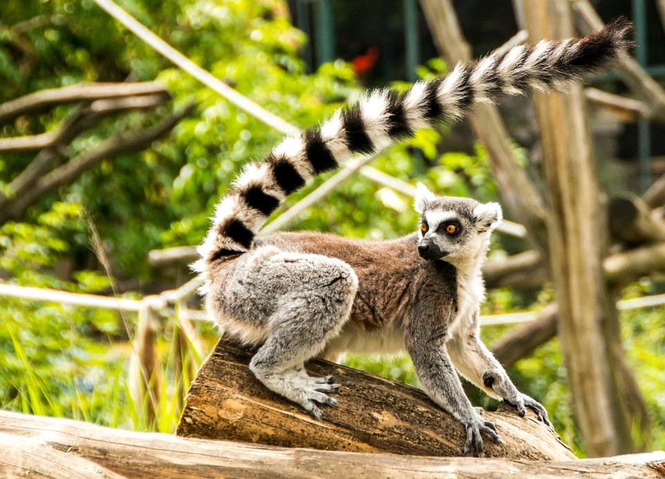Tur in sudul si estul Madagascarului 16 zile/15 nopti