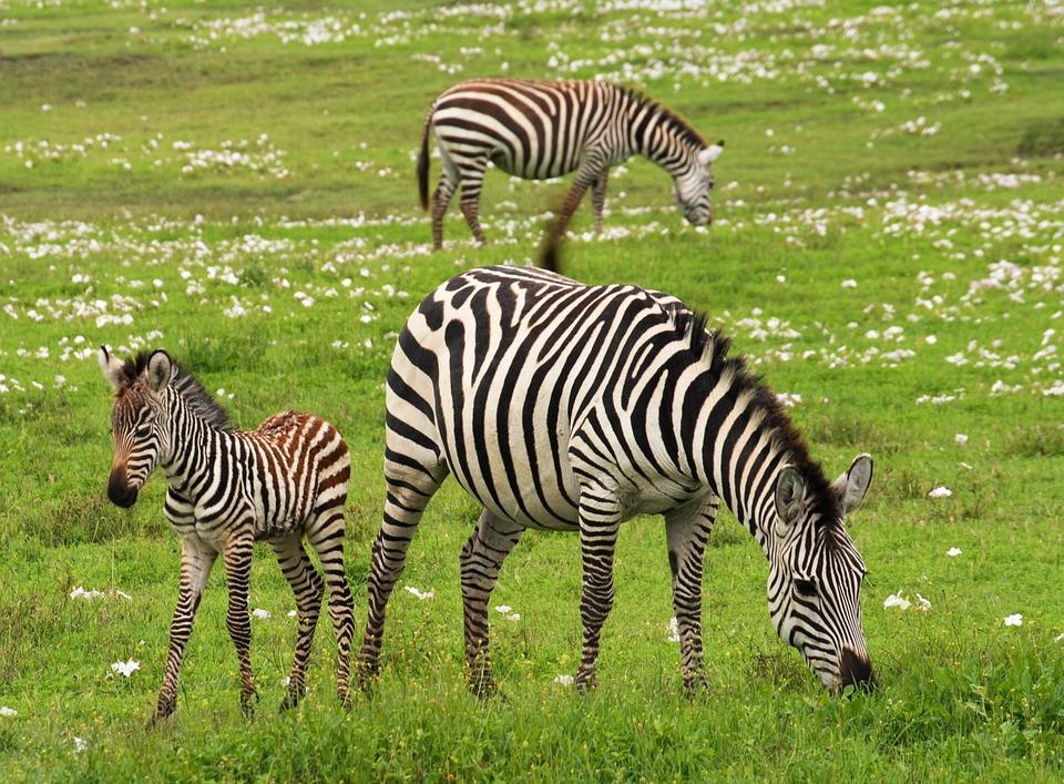 Safari in Zanzibar 13 zile/12 nopti