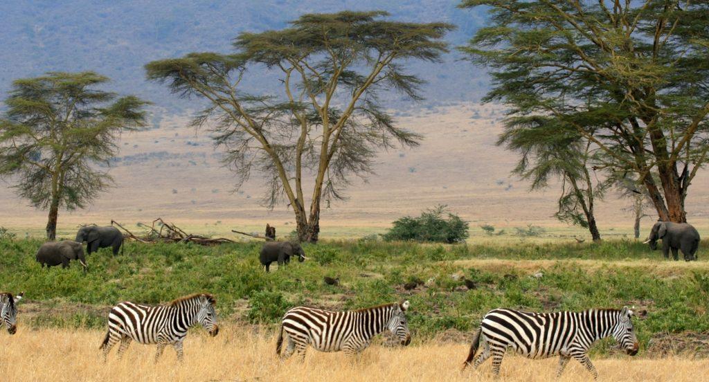 Bucurati-va de o experienta unica de SAFARI in Kenia sau Tanzania!