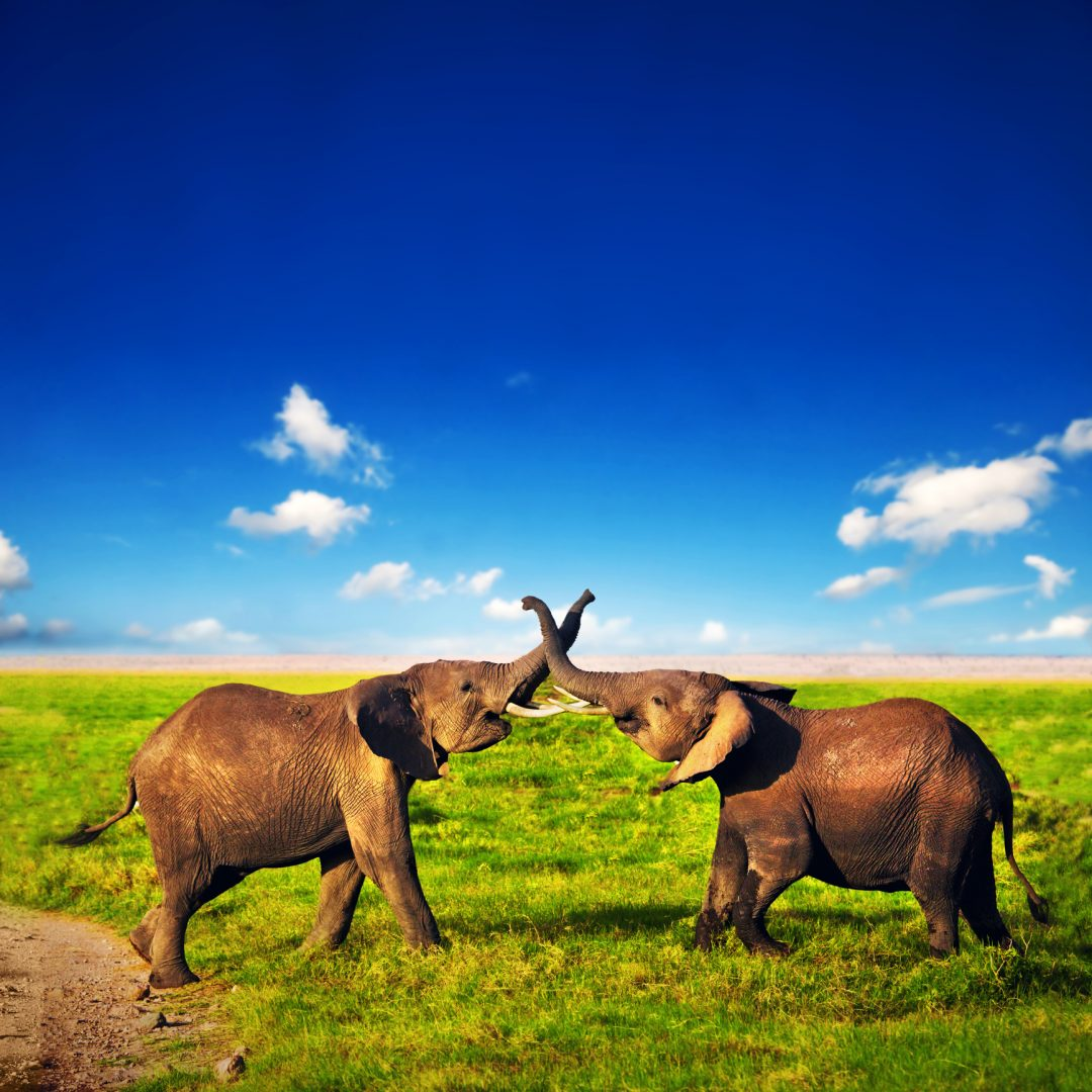 safari karibu kenya