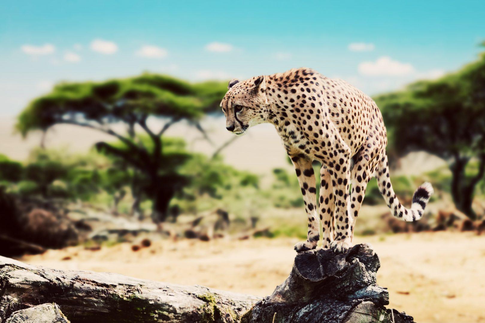 rezervatia masai