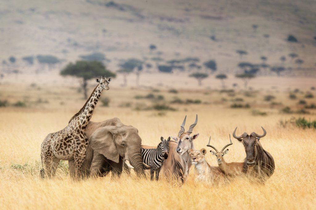 Kenya - Charter Mombasa - Soare, plaja si safari