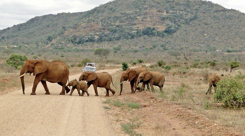 Tsavo East & West National Park